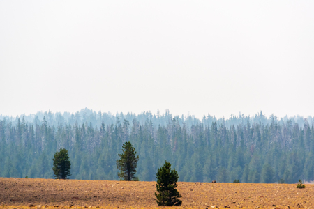 Green trees covered by smoke from nearby forest fire, brown field. It is also original. Stock Photo