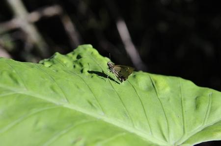 stomach bug: moth