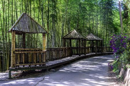 Arrow bamboo forest