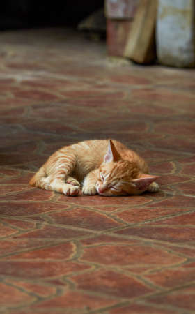 Close-up of a cute Chinese pastoral cat kitten sleeping