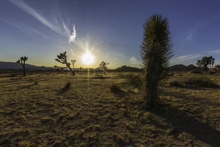 Joshua Tree National Park Sunset