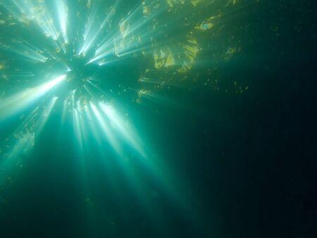 alga marina: vista submarina de algas en sol brillante  Foto de archivo