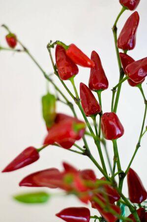 Red Peppers Фото со стока