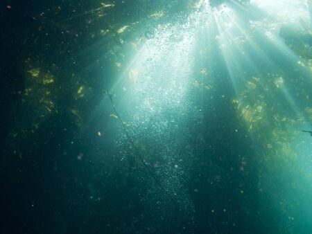 alga marina: Los rayos de luz del sol brillan hacia abajo a trav�s de algas y burbujas