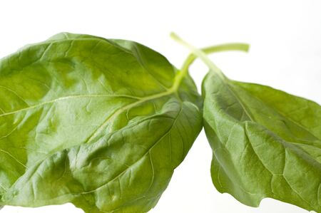 Two fresh basil leaves isolated against white background