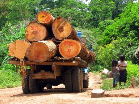 deforestacion: camiones que transportan troncos de madera aserradas, en la selva Editorial
