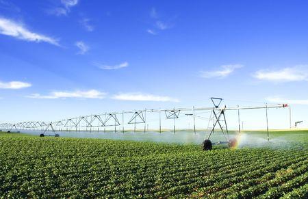 irrigating a potato field Stock Photo - 465347