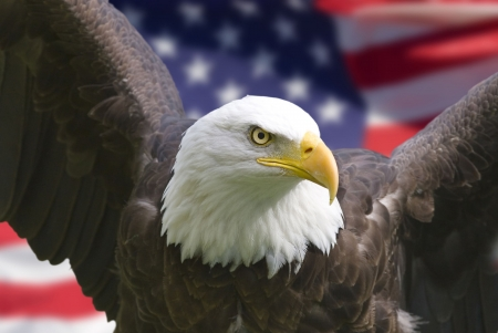 Bald eagle with American flag, focus on head (clipping path) Stock Photo - 668093