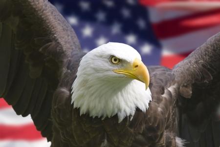 bald eagle: �guila calva con bandera americana, se centran en la cabeza (clipping path)  Foto de archivo