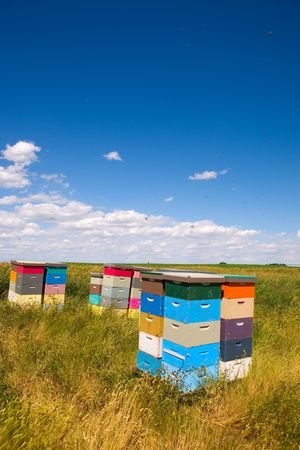 Colorful bee hives with bees swarming in the blue sky