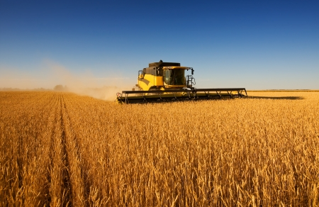 espiga de trigo: Una moderna cosechadora de trabajo de campo trigo