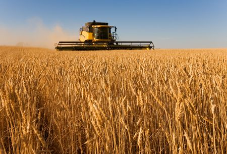 combine: Combine harvester working in a wheat field,(focus on front row of wheat)