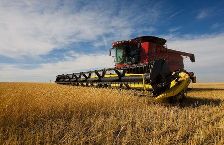 cosechadora: Una moderna cosechadora trabaja en un cultivo de trigo