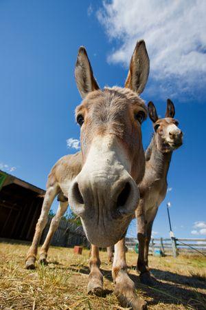 A close-up shot of a donkeys face