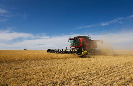 cosecha de trigo: Un par de cosechadoras que trabajan en un cultivo de trigo