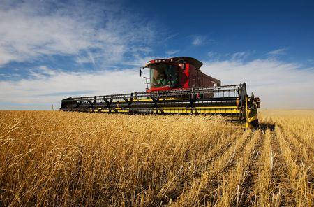 weizen ernte: moderne M�hdrescher arbeiten an einer Weizen-Ernte