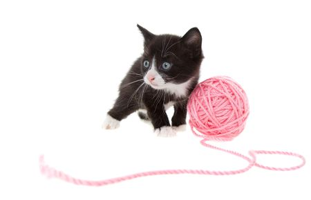 five week old kitten playing with a ball of string