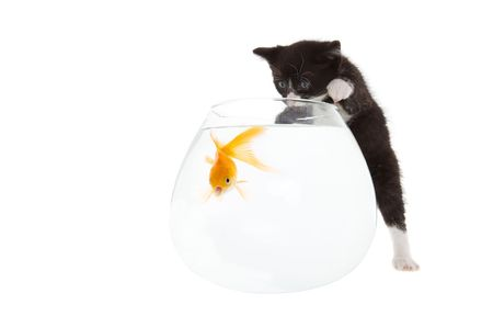 kitten trying to play with a shocked looking goldfish photo