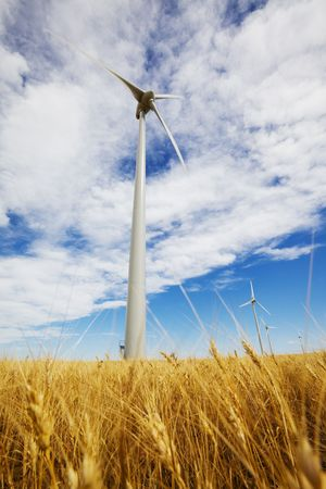 Wind turbines in a wheat field with blue sky  photo