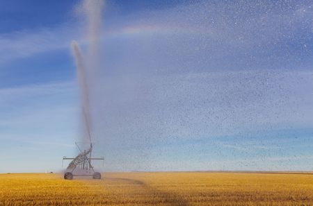 pivot: A pivot in a wheat field spraying water towards the camera Stock Photo
