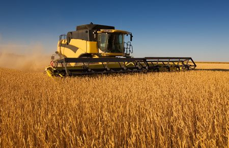 A yellow modern combine harvester working in a wheat field photo