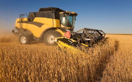 麦畑で働く黄色のコンバイン 写真素材