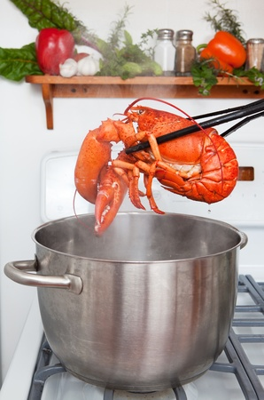 lobster pot: A cooked lobster being lifted from a pot in the kitchen.