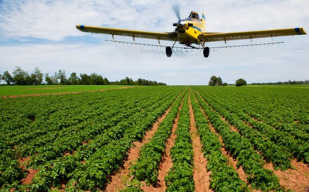 A yellow crop duster spraying a potato field Imagens