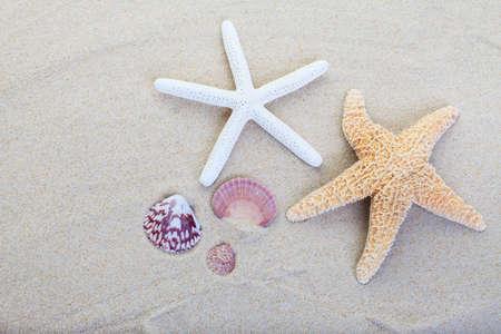 starfish and shells on the beach sand background Zdjęcie Seryjne