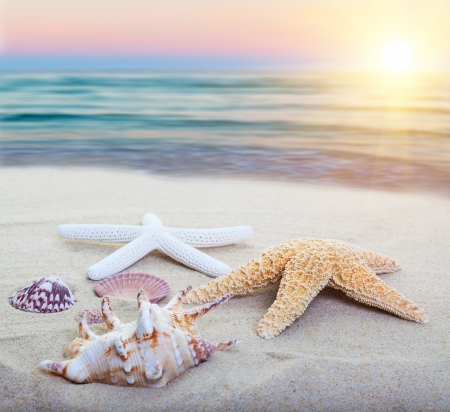 Assorted starfish and sea shells on a beach, main focus on first starfish  photo