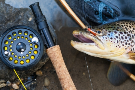 trout fishing: A fly fisherman Stock Photo