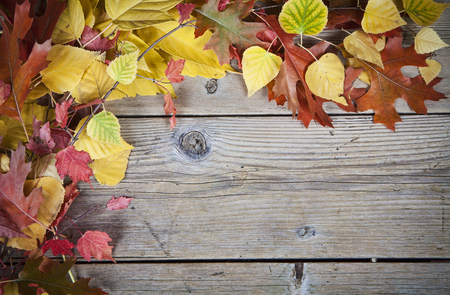 Autumn leaves on a old wooden background.