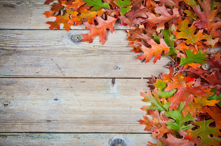 Autumn oak leaves on a old wooden background. 版權商用圖片