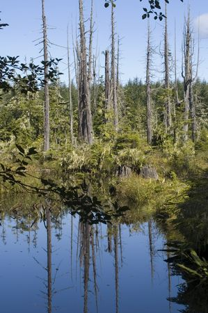 Natural swamp on Alert Bay Island (British Columbia) photo