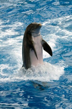 flukes: Dolphin swimming along side looking at viewer
