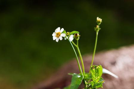 wildflower Banco de Imagens