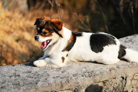 Yawning pet dog on the ground