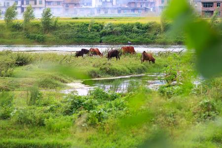 Chinas Hunan Yongzhou Jiangyong pastoral scenery