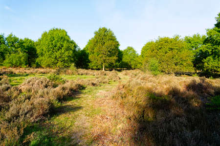 Early spring morning and a faint path winds acoss Budby Heath towards the edge of Sherwood Forest