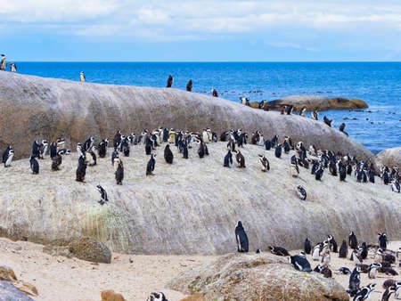 Group of Cape or Jackass penguins on the rocks of Boulders Beach, Simons Town, South Africa Stock Photo