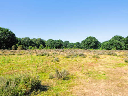 Open heath on the edge of Sherwood Forest on a bright sunny summer day.