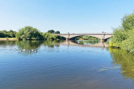 Canada Geese paddle down a calm River Trent towards the three arched Gunthorpe Bridge in Nottinghamshire.