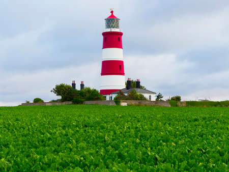 Happisburgh lighthouse surrounded by sugar beet plants set against a evening summer sky