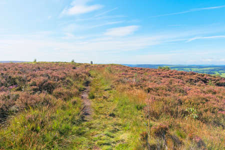 An indistinct footpath winds across the top of Birchen Edge through the heather. Фото со стока