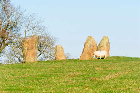 A sheep grazes near one of the remaining stones of the Nine Stone Circle in Derbyshire