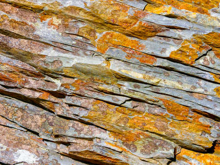 Close up of a piece of cracked Welsh slate covered with golden coloured lichen Stockfoto