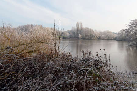 A heavy frost covers reeds and brambles at the side of a frozen lake on a cold winter morning 免版税图像