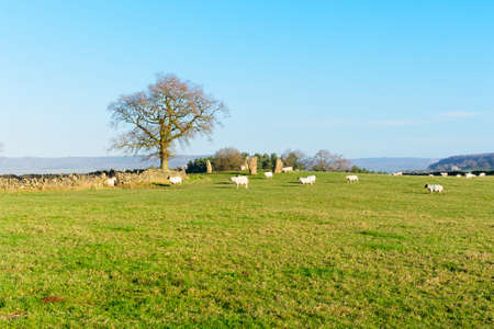 Sheep surround the ancient Nine Stone Circle in Derbyshire