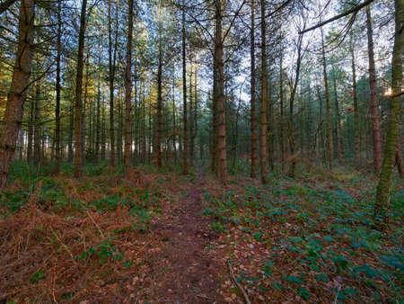 A narrow muddy path passes through dark, damp woodland on a winters morning 免版税图像