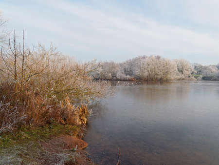 Winter sunshine beging to melt frost from trees and bushes surrounding a small lake on a cold and bright winter morning